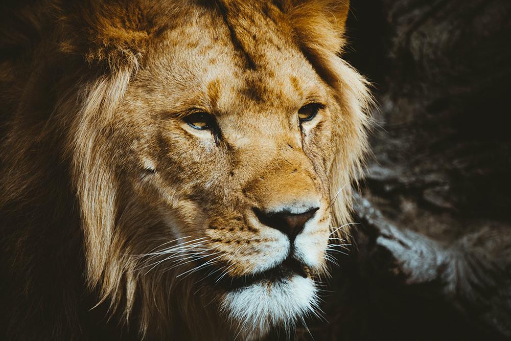 Publicis Groupe Nederland - Lions